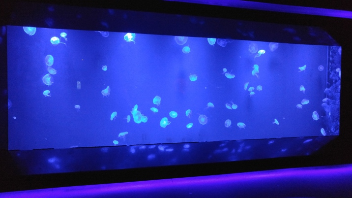 a room of just jellyfish it was very peaceful though there weren't a lot of different types