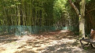 a little bamboo grove