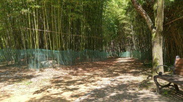 a little bamboo grove