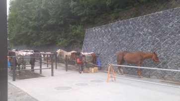 horses you can rent to ride up to the 6th station