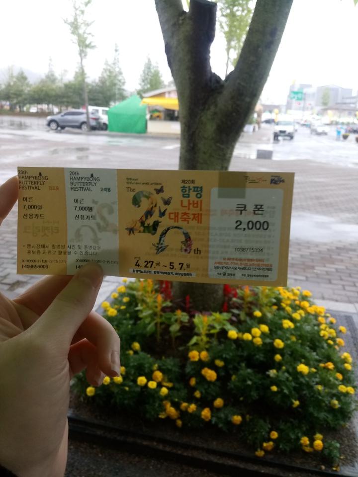 Hampyeong Butterfly Festival 함평나비대축제