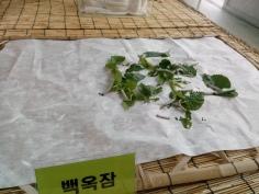 a white caterpillar/silkworm munching away on leaves