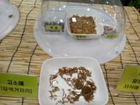 고소애, meal worm