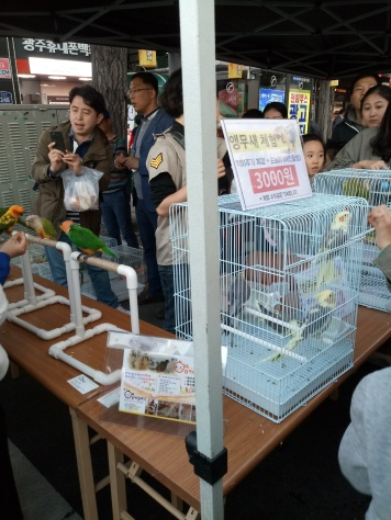 meeting and feeding birds from the local parrot cafe: 앵 카페
